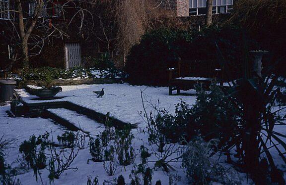 Bluecoat garden, winter