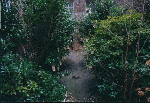 Bluecoat's 'secret garden'